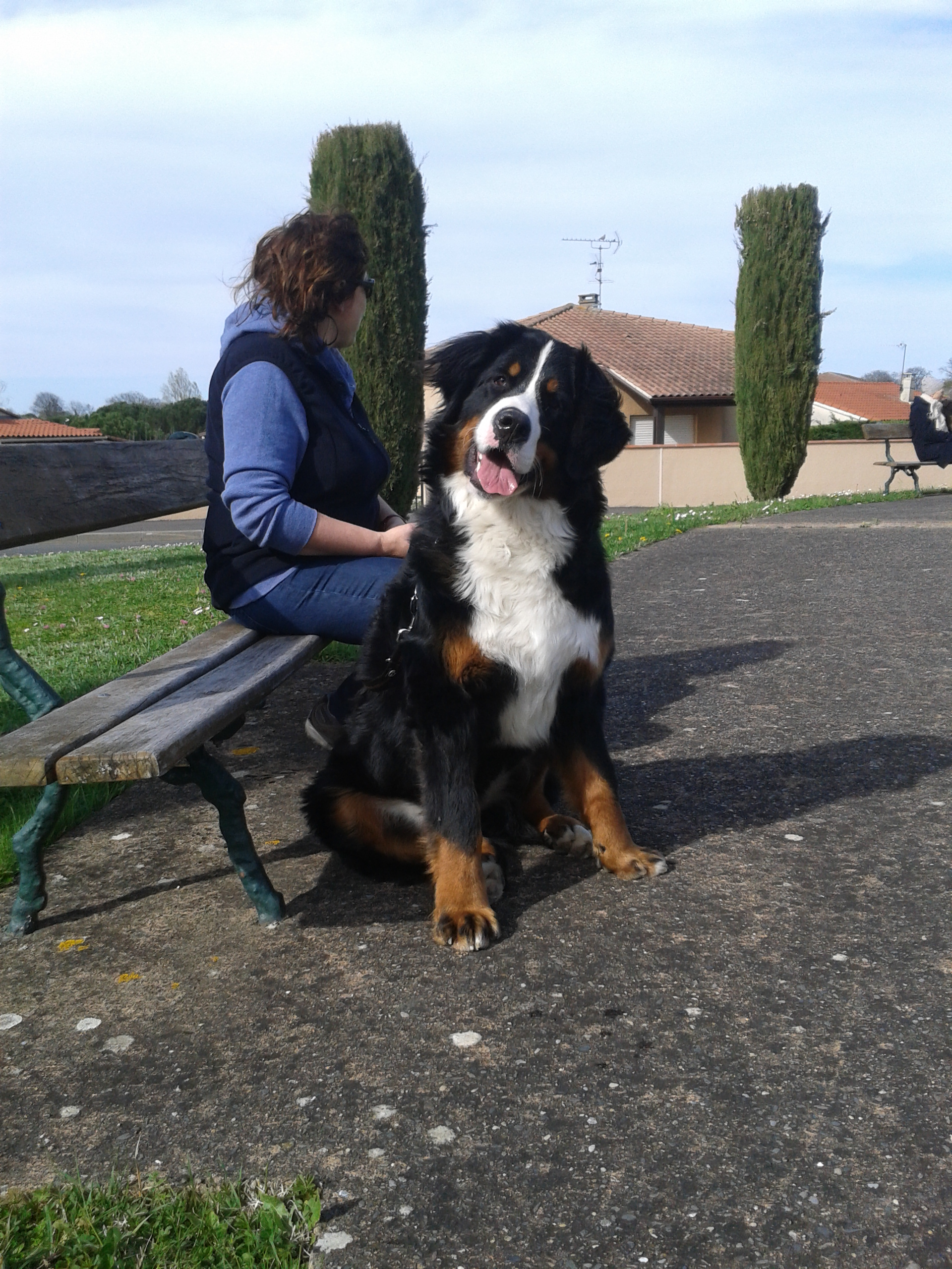Cours éducatif pour chiens à Tournefeuille