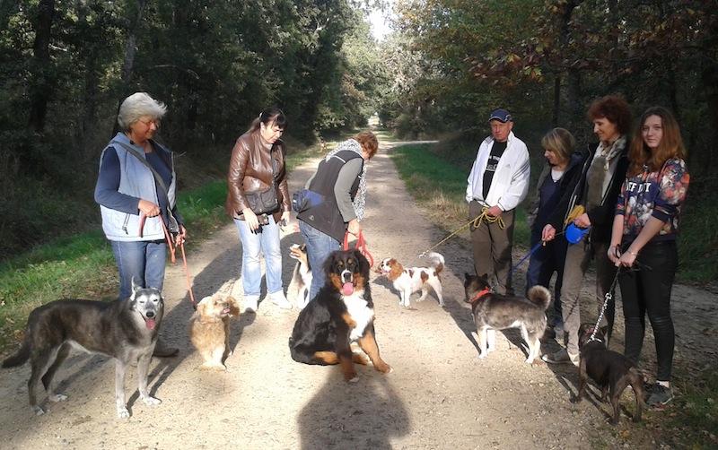Cours collectifs chiens à Plaisance du Touch