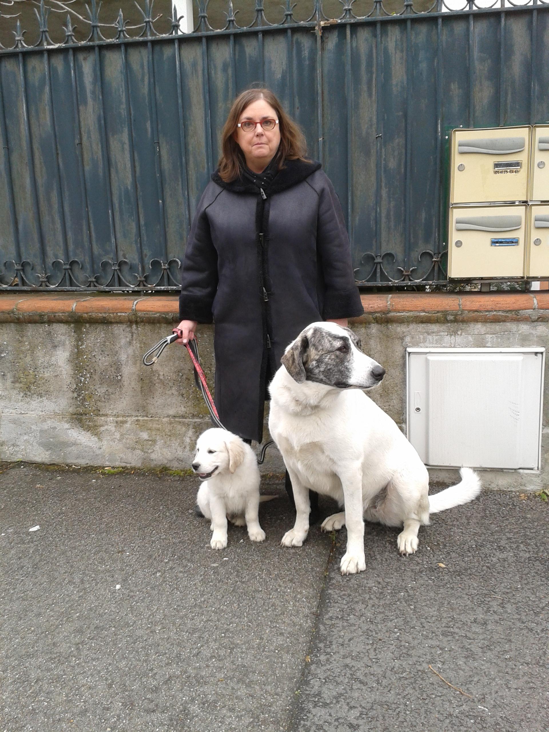 cours d'éducation canine à Tournefeuille
