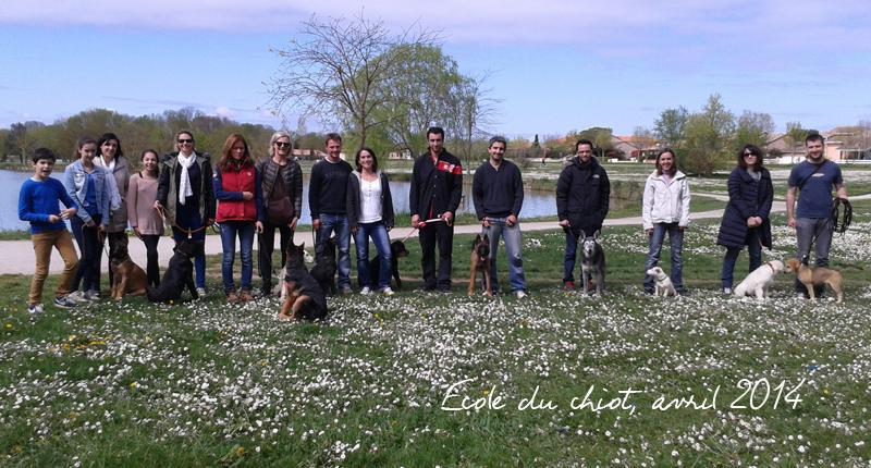 Ecole du chiot à Toulouse