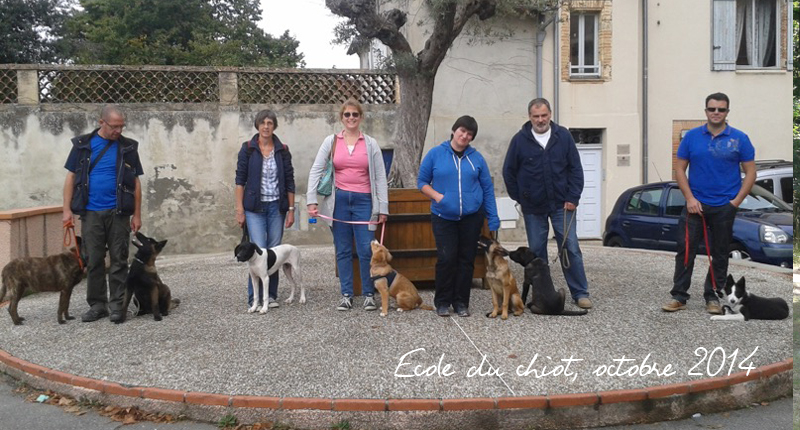 educateur canin a colomiers
