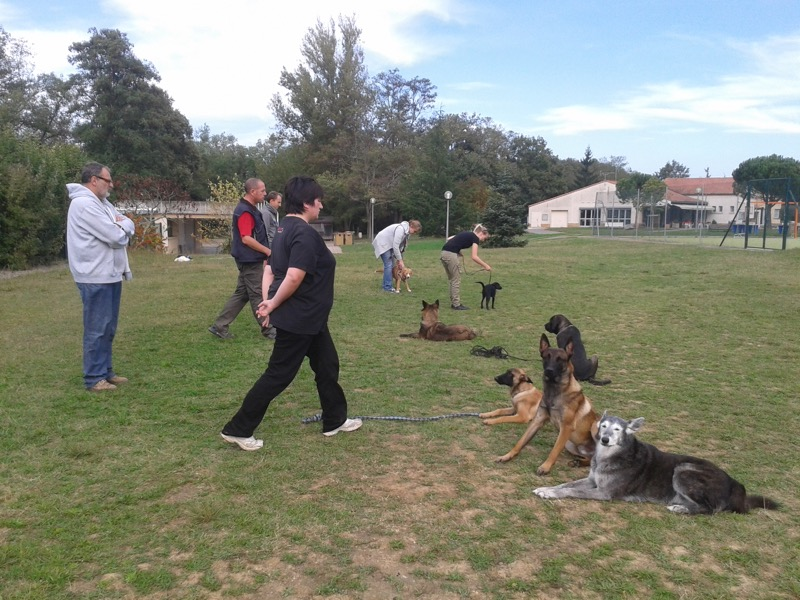 educateur-canin-toulouse-centre